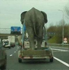 elefante, grande, transporte, desajeitado, yahoo